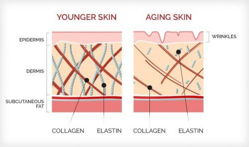 collagen-diagram-3